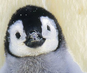 animals and penguin image