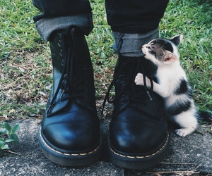 adorable, cat, and cute image