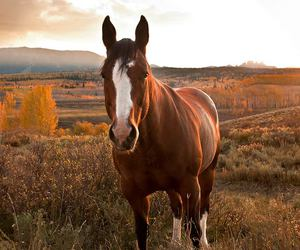 horse, nature, and beauty image