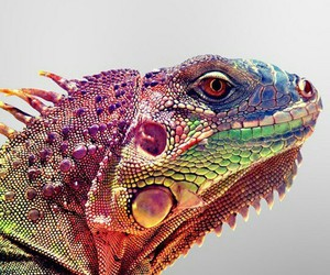 chameleon and lizard image