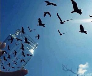 bird, sky, and freedom image