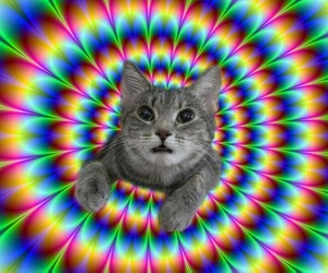 trippy, cat, and lol image