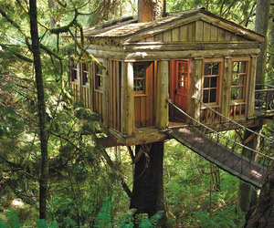 tree house and nature image