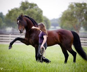 horse, girl, and complicité image