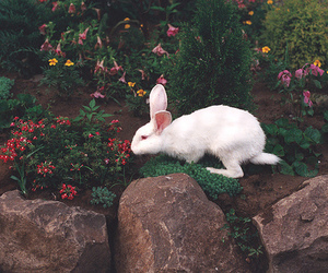 animal, rabbit, and flowers image