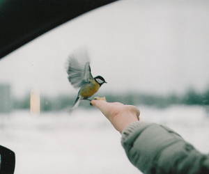 bird, hand, and photography image