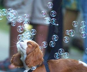 dog, lindo, and perrito image