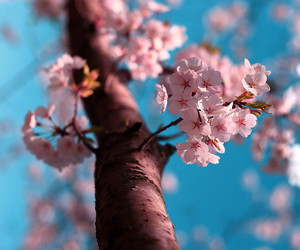 flowers, photography, and pastel image
