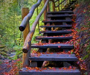 nature, stairs, and autumn image