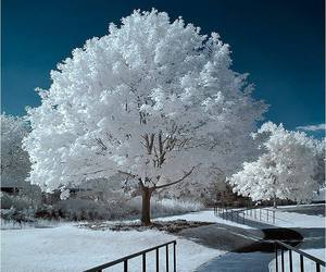 tree, white, and winter image