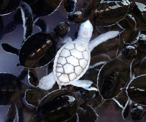 turtle, animal, and white image