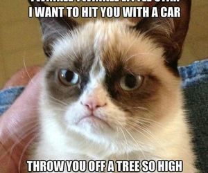 great, hilarious, and grumpycat image