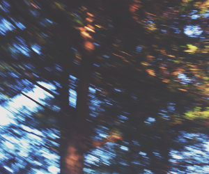 blurry, trees, and forest image