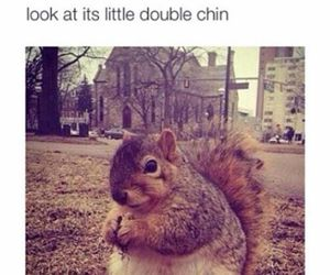 cute and squirrel image