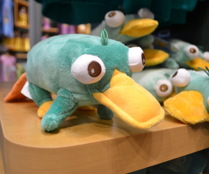 perry, Platypus, and perry the platypus image