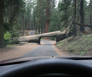 tree, funny, and road image