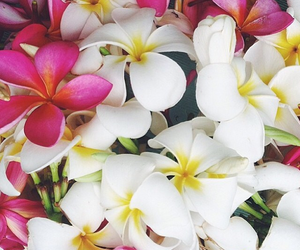 decor, exotic, and flowers image