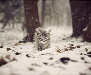 aww, winter, and kitty image