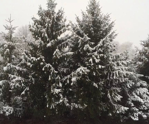 pine trees, pretty, and quality image