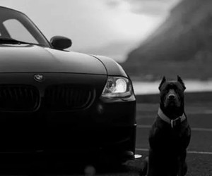 dog, bmw, and animal image