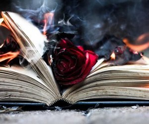 book, rose, and fire image