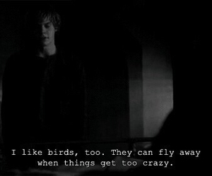 american horror story, bird, and ahs image