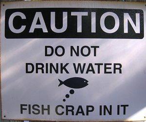fish, crap, and funny image