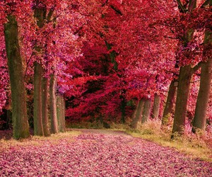 pink, autumn, and beautiful image