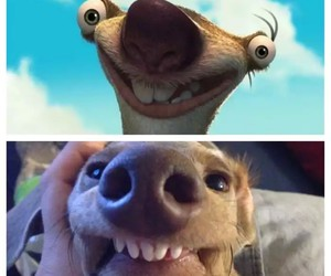 dog, funny, and ice age image
