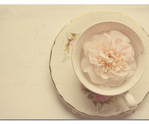 flower, cup, and pastel image
