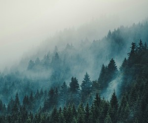nature, forest, and winter image