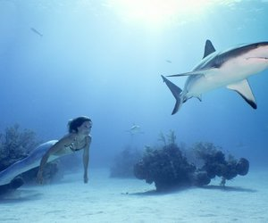 sharks and she only gives blow jobs image