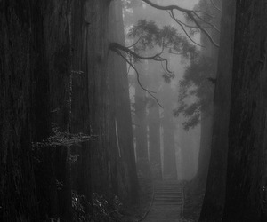forest, dark, and black and white image