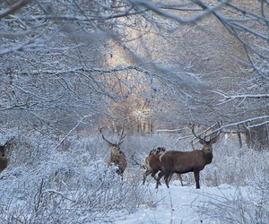 deer, forrest, and snow image