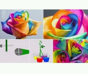 colour, diy, and flower image