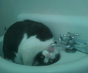 cats, wtf, and funny image