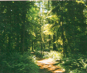 35mm, ferns, and path image