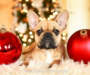 christmas, dog, and red image