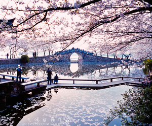 beautiful, japan, and flowers image