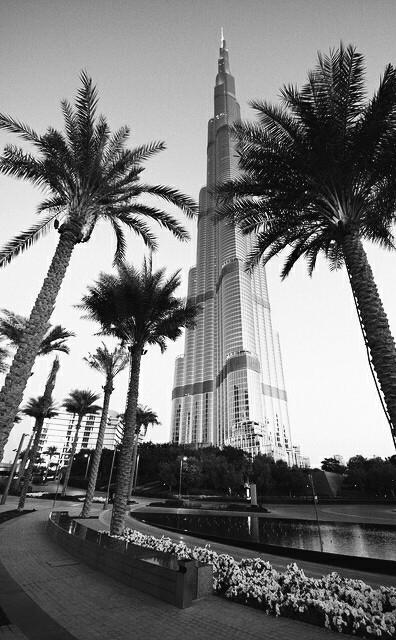 Dubai, city, and palms image