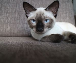 <3, blue eyes, and kitten image