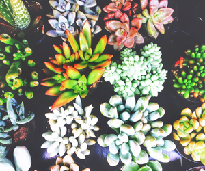 cactus, plants, and wallpapers image