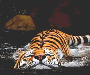 animal, beauty, and life image
