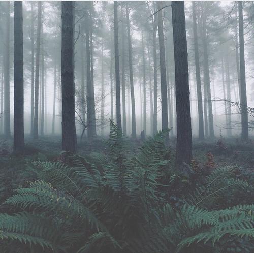 grunge, dark, and green image
