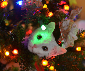 cat and christmas image