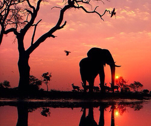 africa and beautiful image