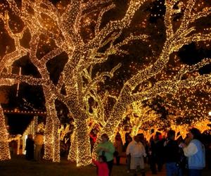christmas, lights, and walk image