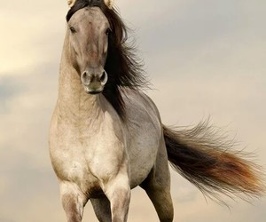 animal, beautiful, and horse image