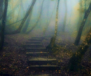 forest, steps, and beautiful image