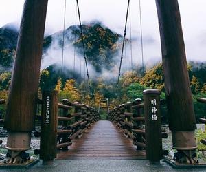 bridge, nature, and travel image